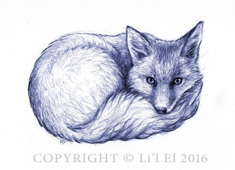 Curled Fox by Lil-el-art