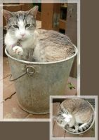 Cat Bucket by LilleahWest