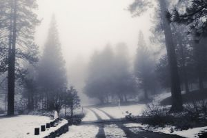 Foggy February Morning II by EmiNguyen