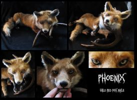 Phoenix red fox soft mount by WoroTax