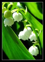 lily of the valley by reachmehere