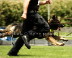 K9 police on the run by kashadog