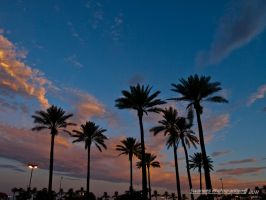 Sunset and Palms by Swanee3