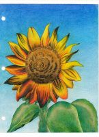 Sunflower by jesus-at-art