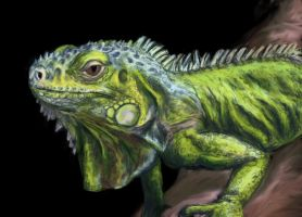 Iguana for Munch12 by Kaya-STrissa