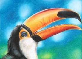 Toucan by oakleyc