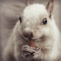 White squirrel portrait by zvaella