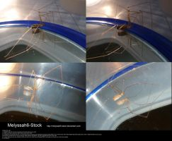 Spider and Mirror Stock 1 by Melyssah6-Stock