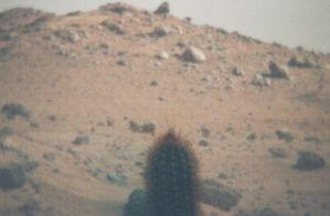 Cactus on Mars by gangstergazelle