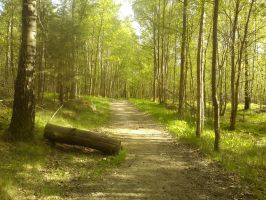 Lonely road in the woods by ProjektGoteborg