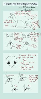 A basic RED FOX anatomy guide by PawzMallina