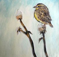bird on dead dandelions by ohsolovelyleah