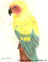 Parrot by wildwolves
