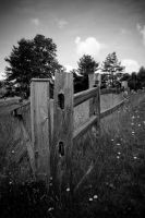 Fence by dspittard