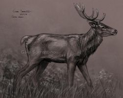 Red Deer sketch by makangeni
