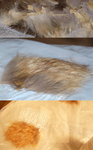 Fixing Dry Rotted Fur by Eliea