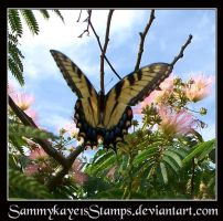 Butterfly 1 by Sammykaye1sStamps