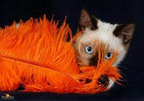 the orange feather cat by Kirikina