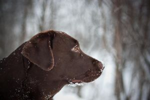 winter_in_chocolate by AlesanaCore