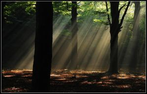 Another great sunbeam morning by jchanders