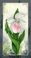 Lady's Slipper Orchid by MisticUnicorn