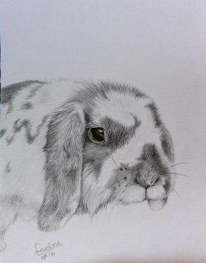 My bunny (Finished) by Horsenart95