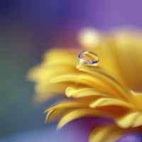 drop petal. by simoendli