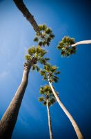 'Palms to the Heavens' by MichaelCraig