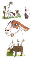 Goats and Goats and Cow by Allison-beriyani