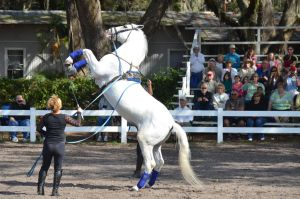 Lipizzaner Stallions 16 by Lauren-Lee