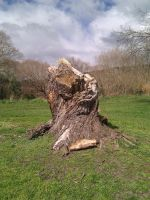Tree Stump by Loftystocks