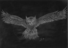 Owl Sketch by Lonewolf521