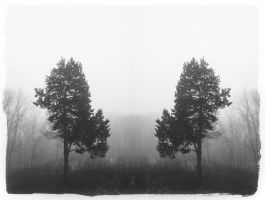 Two Trees by RAOqwerty