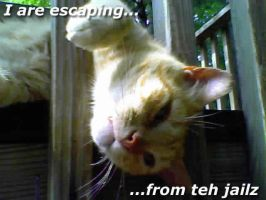 LOLCATS Kitten escape by Kivakwolf