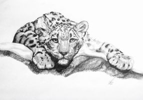 Snow Leopard by salt25