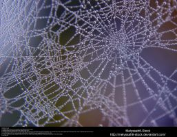 Spiderweb Dewdrops Stock Texture 1 by Melyssah6-Stock