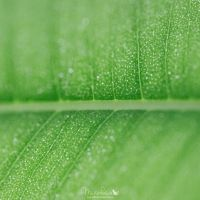 Green life by Musterkatze