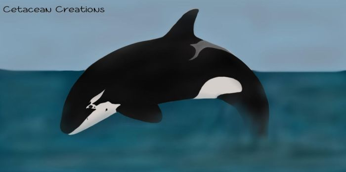 Orca Adoptable # 9 by CetaceanCreations