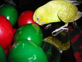 Easter..... parrot by Storm1287