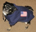 Patriotic Pooch 2 by kissmypixels