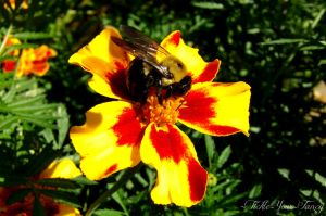 Bumble Bee by Tickle-Your-Fancy