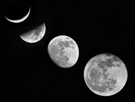 Moon Phases by LisaMacNewton