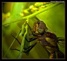 Almost Warm Enough by boron