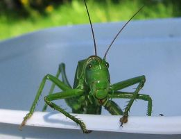 Grasshopper 2 by melemel