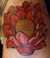 red lodus flower by ChadGrimm
