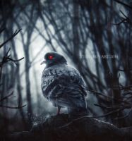 Red Eye Pigeon by ZedLord-Art