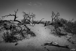 Dead trees by MCL28