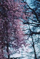 Spring is here by MichaWha