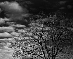 tree branches by awjay