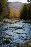 White Mountains  Fall Foliage  162 by FairieGoodMother
